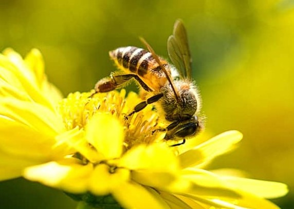 pszczola.jpg